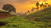 Book Now The Latest Kerala Tour packages With Affordable Offers!